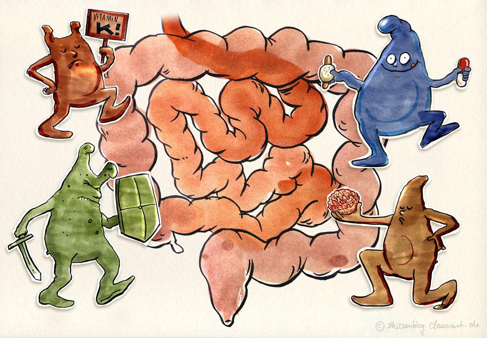 Der Darm und seine Bakterien