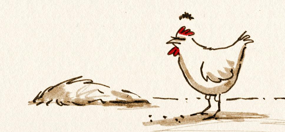 Lone Chicken McQuade